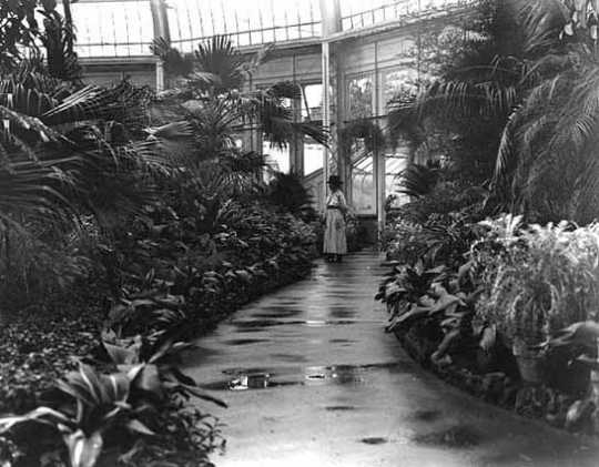 Black and white photograph of the Palm Dome interior, 1918.