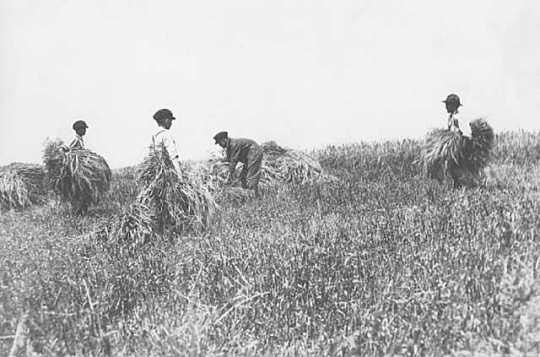 Black and white photograph of boys at work on the farm of the State School, c.1910.