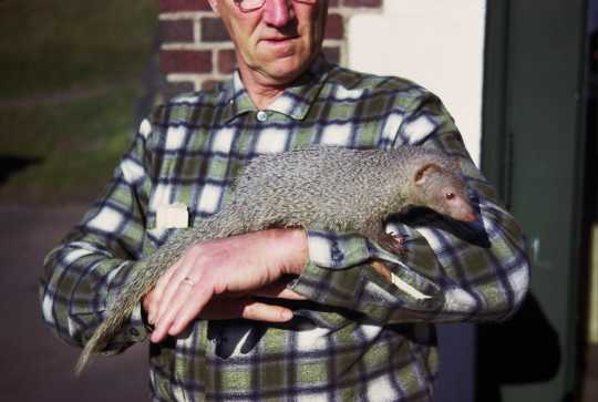 Photograph of Lloyd Hackl with Mr. Magoo the mongoose, 1963.