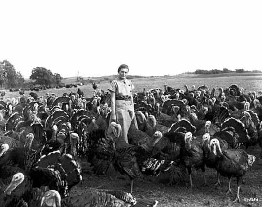 Black and white photograph of a woman with turkeys, 1952.  Photograph by Norton & Peel.