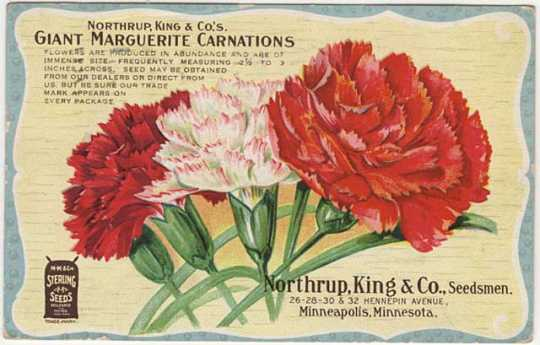 Postcard advertising Northrup, King and Company carnations