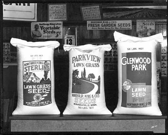 Bags of Northrup, King and Company lawn seeds