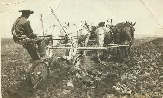 Black and white photograph of a worker using horses to plow the fields at the Northwest Experiment Station, 1912.