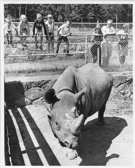 Photograph of a rhinoceros at the Lake Superior Zoo
