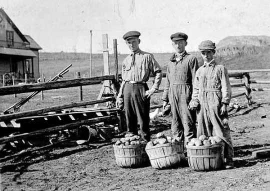 Black and white photograph of 4-H Potato Club members Alvin Tofte, Andrew Tofte, and Hjalmar Tofte in 1918.