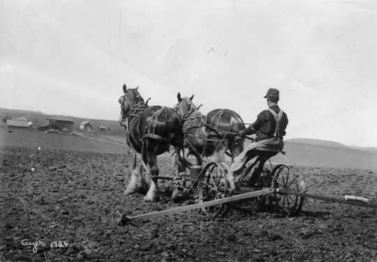 Farmer planting corn, ca. 1910. Photograph by Harry Darius Ayer.