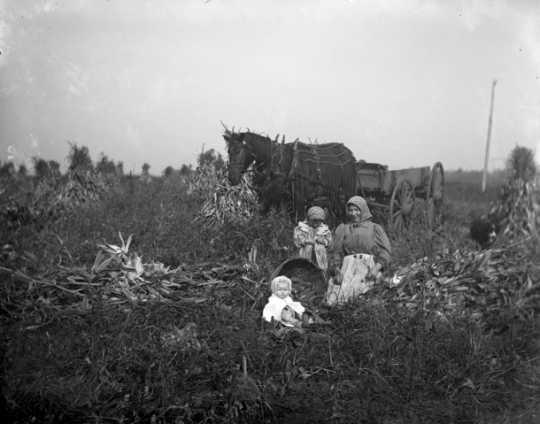Women and children among corn shocks, McLeod County, ca. 1900.