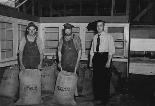 Black and white photograph of WPA workers with grasshopper bait for distribution to farmers, 1937.