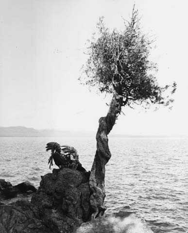 Manito gizhigans (spirit little cedar tree)