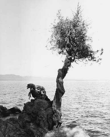 Manito gizhigans (spirit little cedar tree)