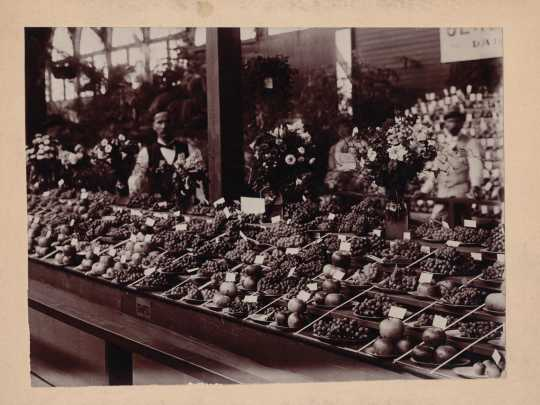 Black and white photograph of a fruit display at the Minnesota State Fair, 1899.