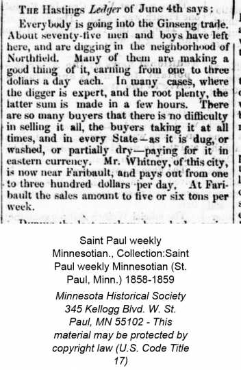 """Clipping from the St. Paul Weekly newspaper, June 11, 1859. This article mentions the number of people who have moved to """"around Northfield"""" to dig Ginseng. It also mentions that """"At Faribault sales amount to five or six tons per week."""""""