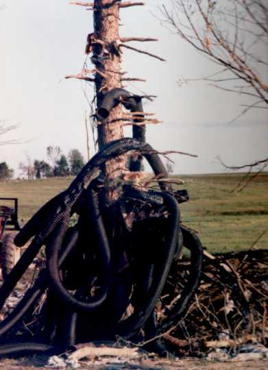 Tubing debris wrapped around a tree in the aftermath of the Chandler–Lake Wilson Tornado, June 1992.