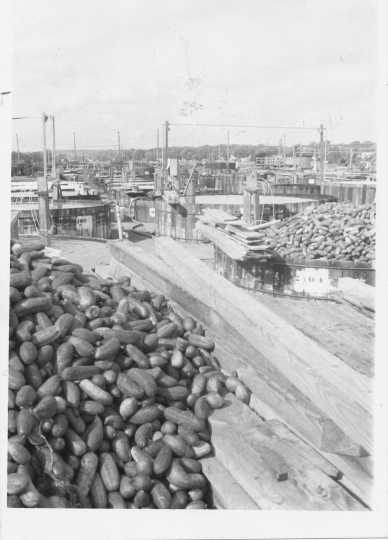 Black and white photograph of the exterior of the Chaska pickling factory showing the vats used to brine the pickles, undated.