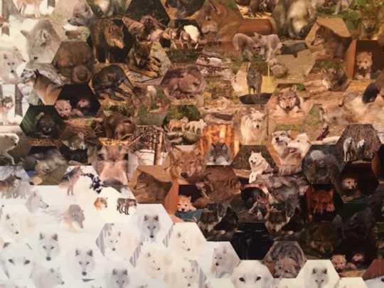 Mosaic at International Wolf Center