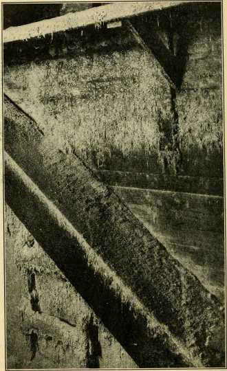 Black and white photograph of a wall of a poorly kept flour mill with accumulations of flour webbed by a flour moth. U.S. Department of Agriculture, 1913.