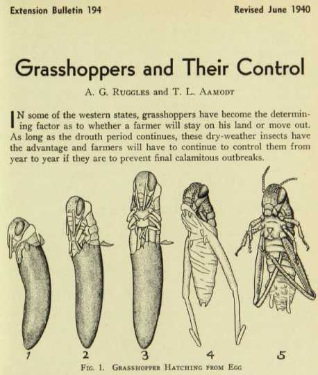 Diagram of a grasshopper hatching. Published in University of Minnesota Extension Bulletin 194, revised June 1940.