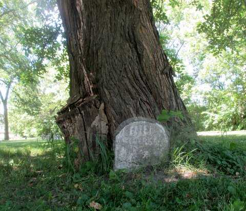 Color image of a headstone set into the base of a tree at Pioneers and Soldiers Memorial Cemetery in Minneapolis, 2016. Photographed by Paul Nelson.