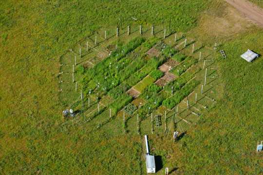 Aerial view of BioCON, a free carbon experiment investigating the effects of global change on ecosystems, in Cedar Creek Ecosystem Science Reserve.