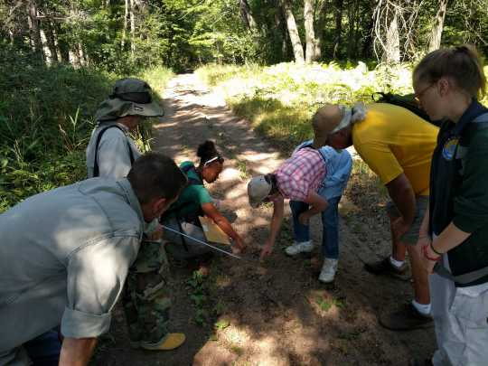 Citizen scientists at work at Cedar Creek Ecosystem Science Reserve