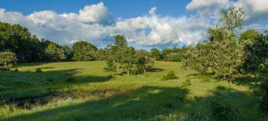 Color image of the Helen Allison Savanna Scientific and Natural Area, Anoka County, ca. 2010.