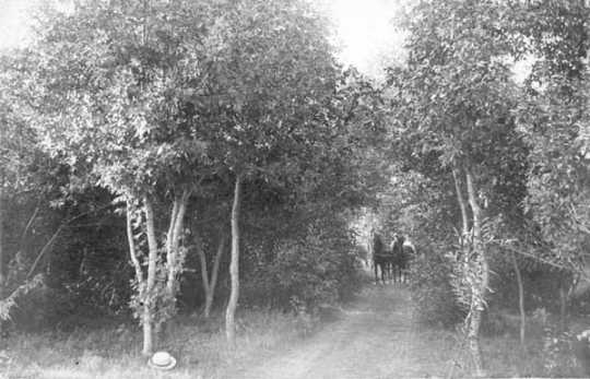 photograph depicting a road through a grove of trees