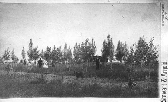 photograph of several individuals standing in front of a field of young trees